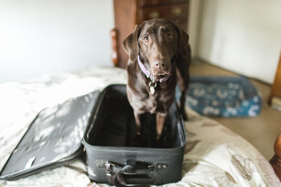 Determining Whether It S Worth Taking Your Pet Abroad
