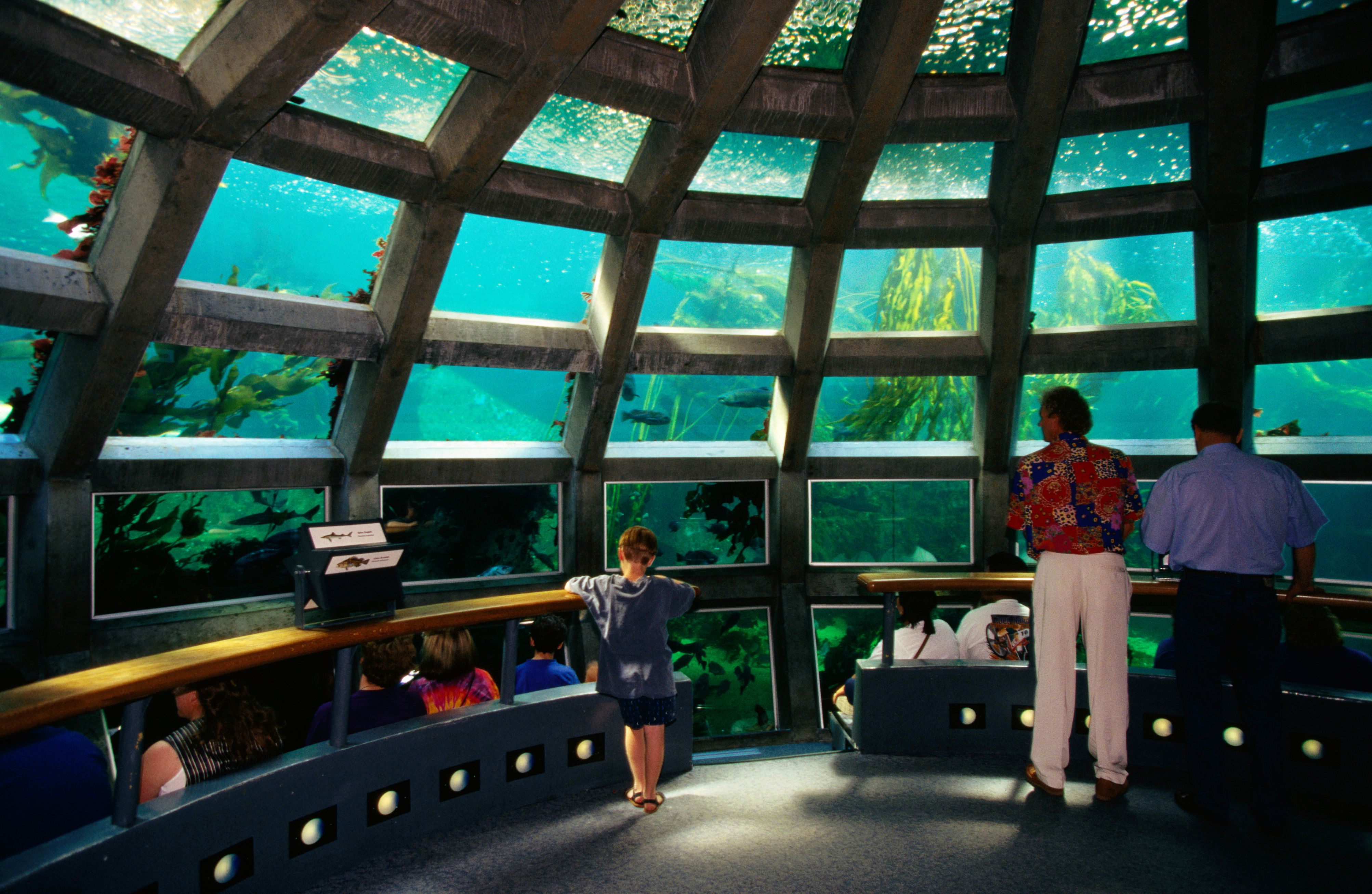 Interior del acuario de Seattle