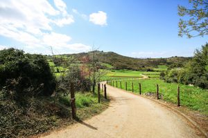 The path through green fields
