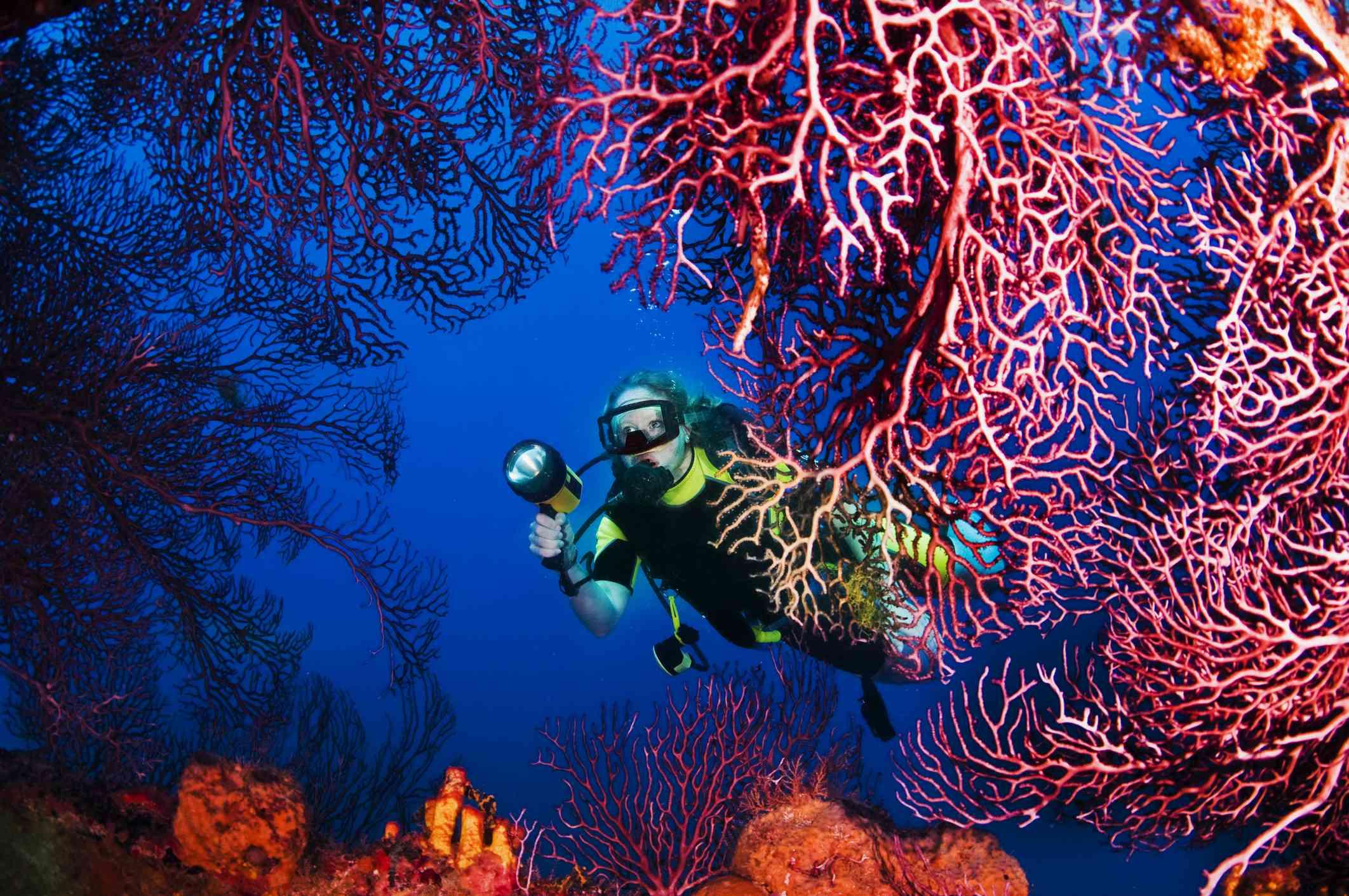 Lesleen M Wreck scuba site, St. Lucia