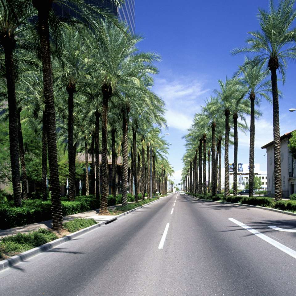 Palm tree lined street, Phoenix, Arizona