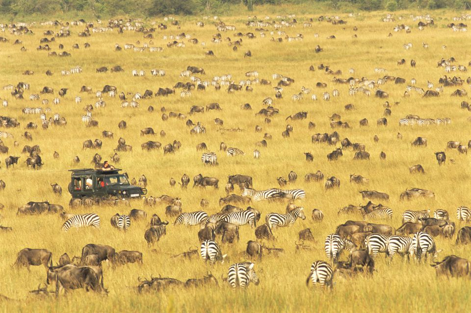 Tourists watching wildebeest and zebra migration