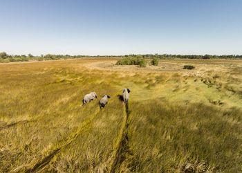 Aerial view of Elephants in Marsh, Botswana