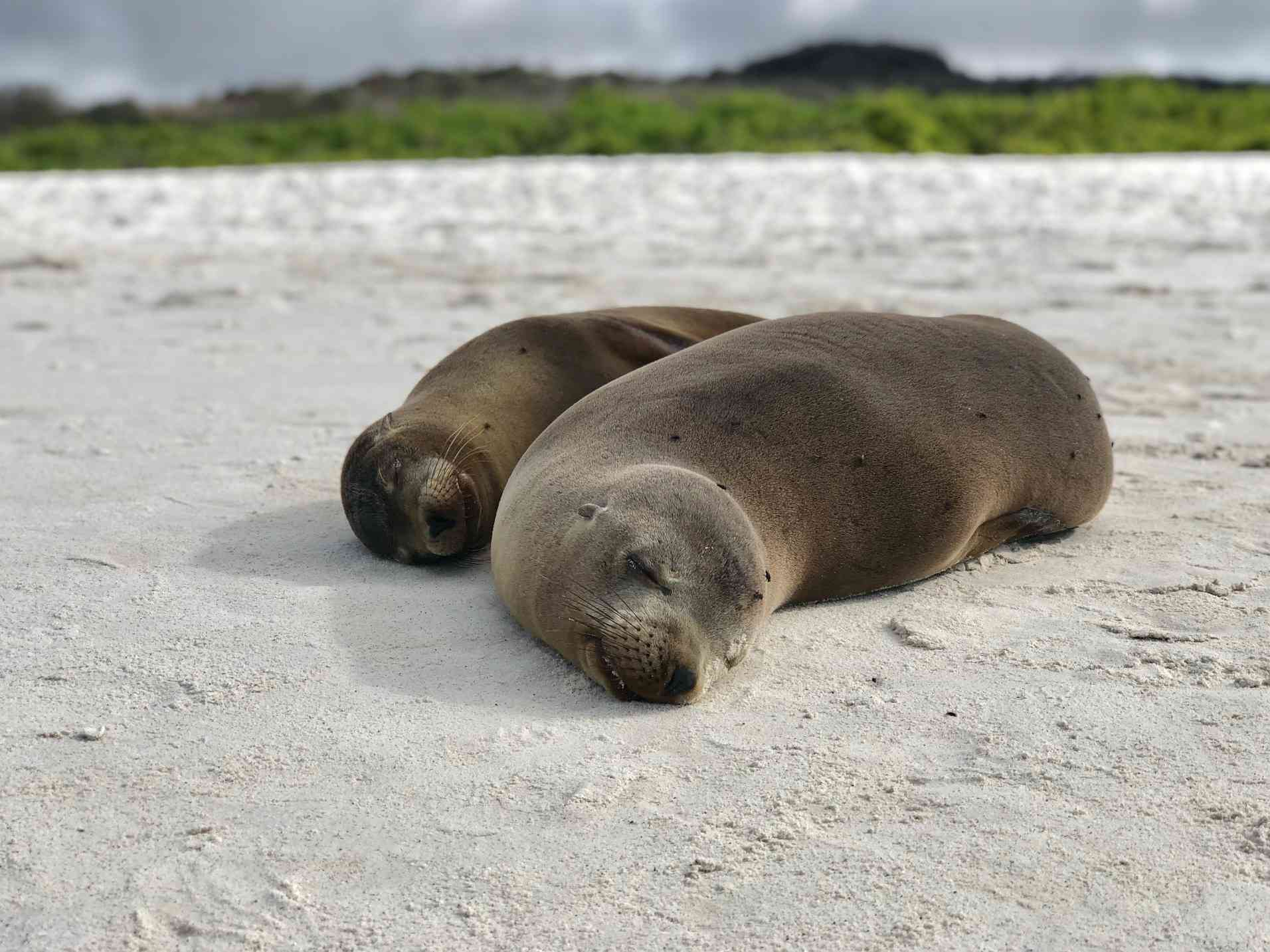 Getting cozy with sea lions on a Galapagos cruise