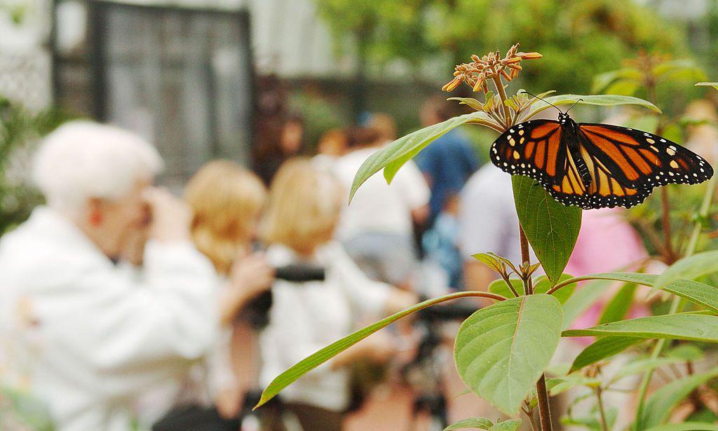 International Butterfly Show Held In Cincinnati