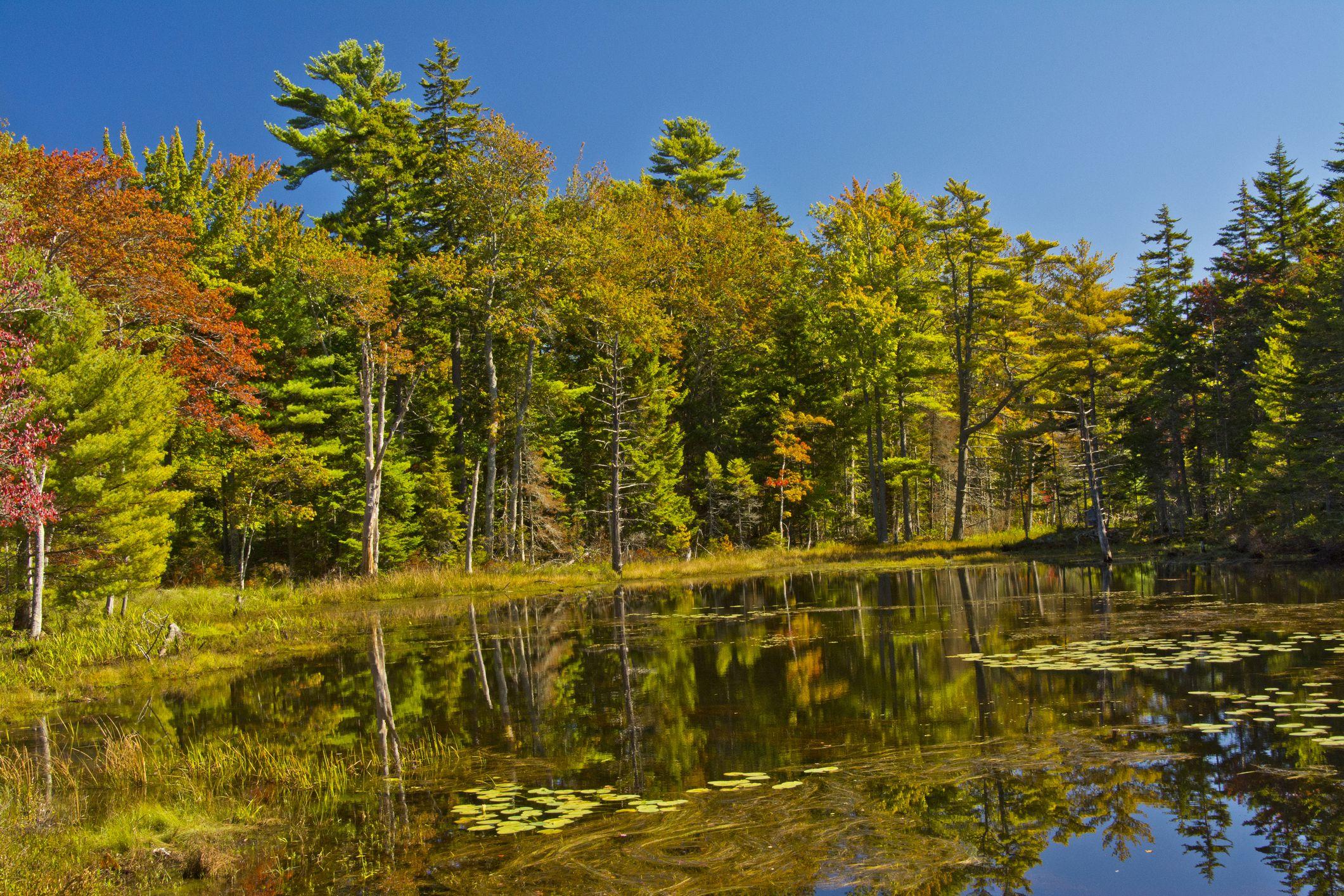 Autumn forest by Joe Bill Pond, Georgetown, Maine