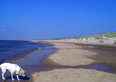 Beach at North End of Bloemendaal aan Zee