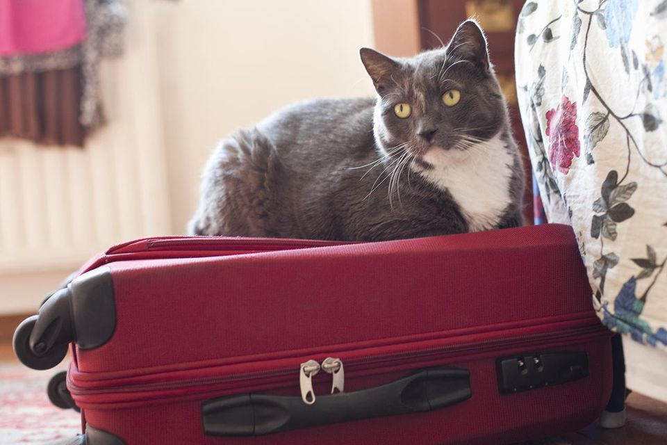 a cat on a suitcase