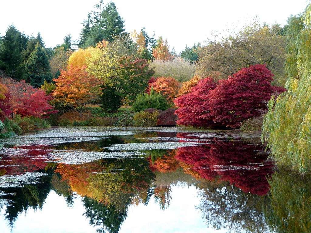 Fall foliage at VanDusen Botanical Garden, Vancouver, BC