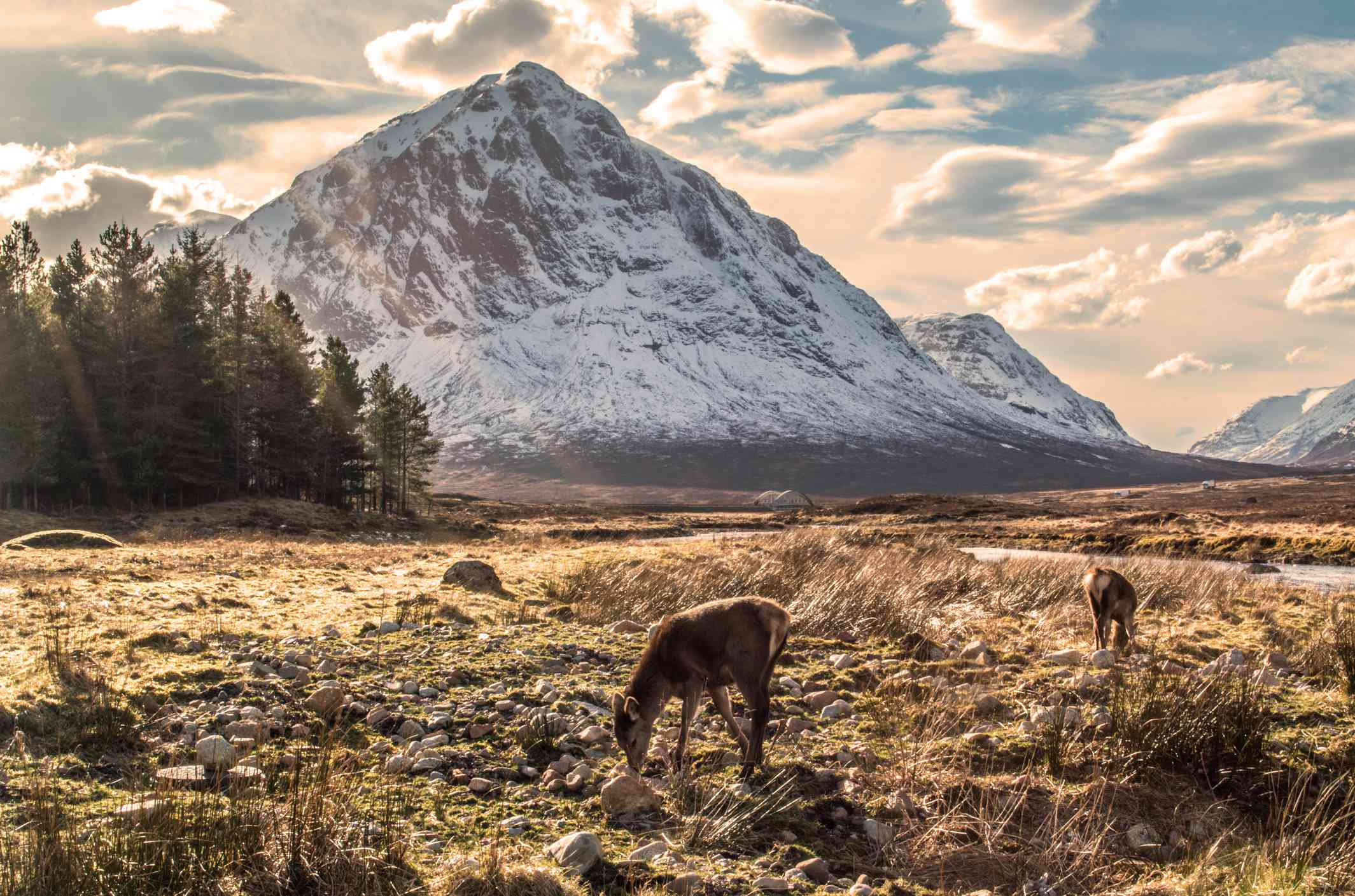Snow on Buachaille Etive Mor, Glencoe, Scotland - stock photo Buachaille Etive Mor on a fine winters day, with red deer grazing and the River Etive curving into the foreground. Taken at the Kings House, Glencoe, Argyll and Bute, Scotland, March 2014.