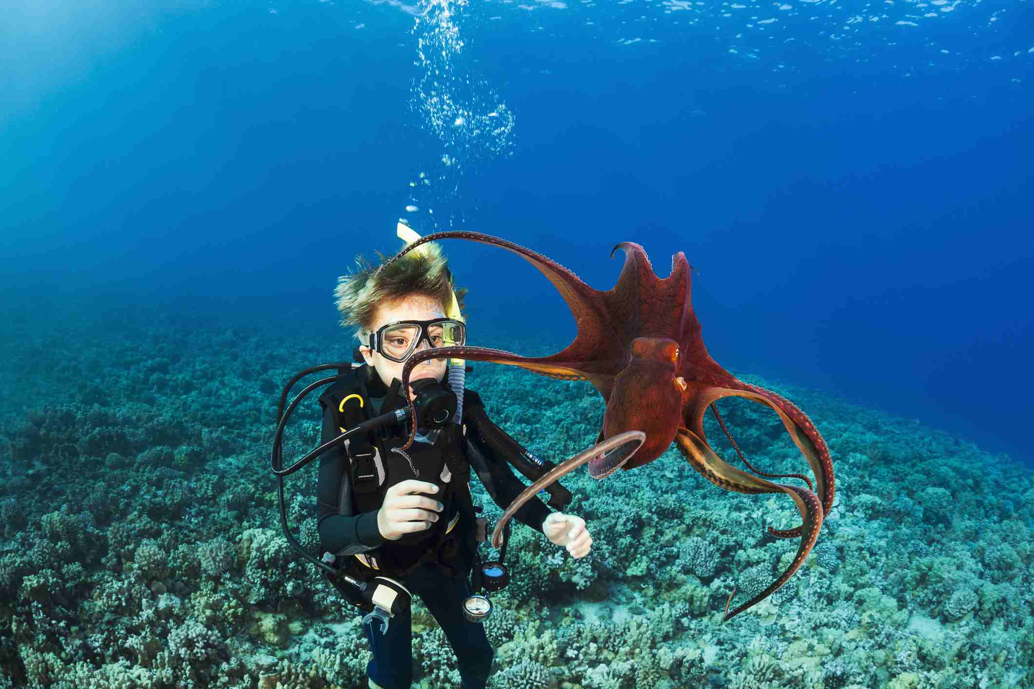 Scuba diving with octopus