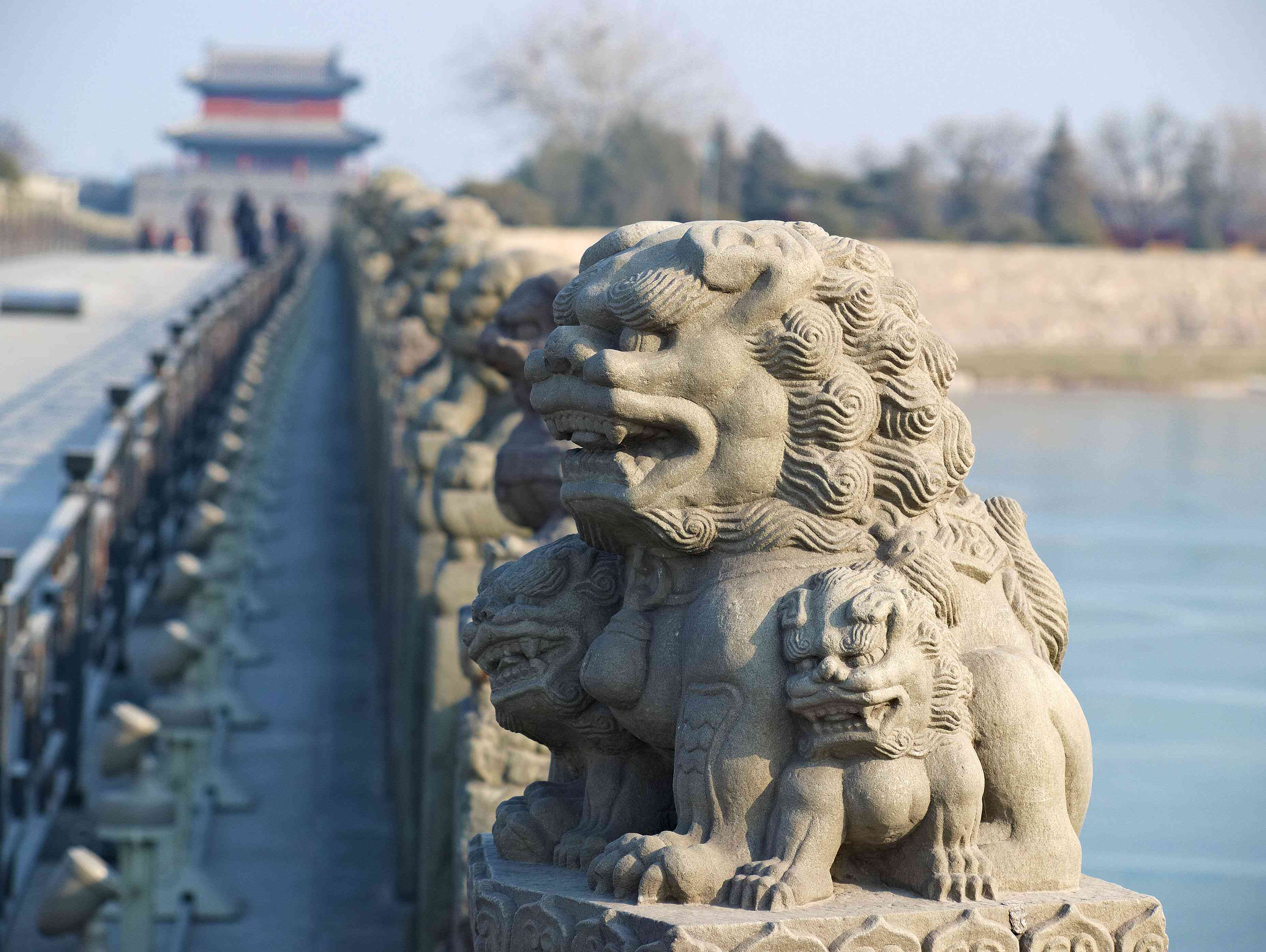 Lions at Marco Polo Bridge