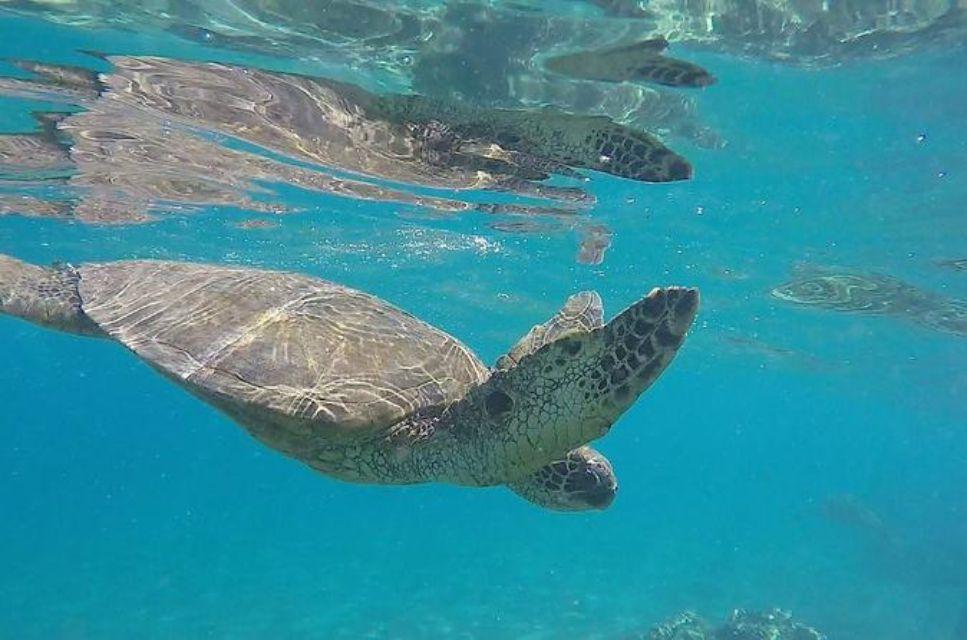 Aventura de snorkel y tortugas verdes de Molokini en grupos pequeños desde Maui