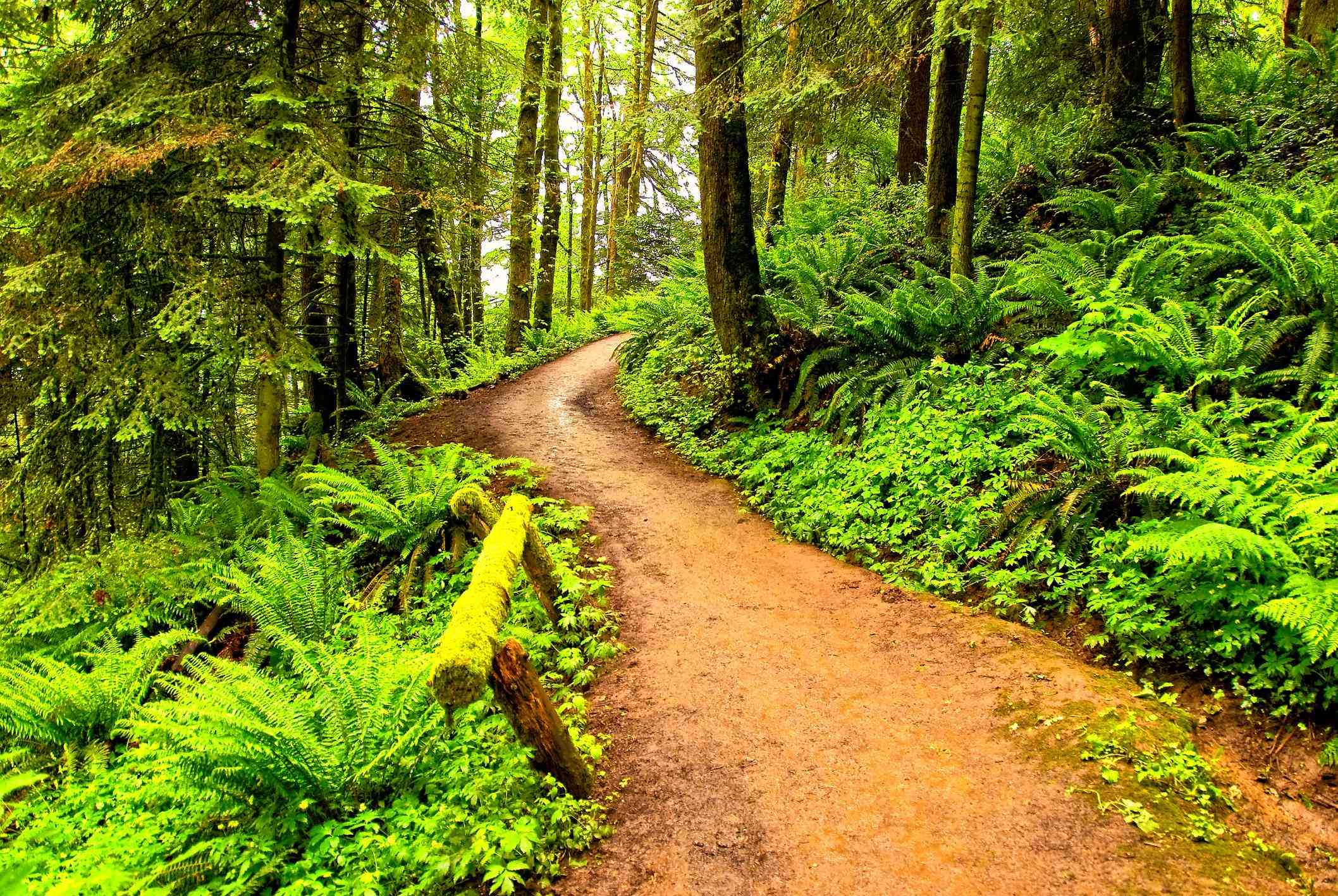 Footpath in Forest Park, Portland