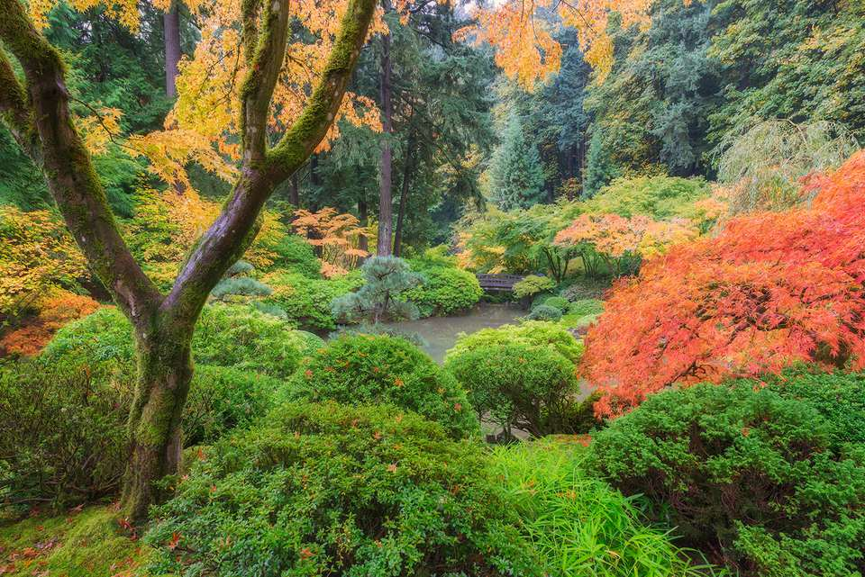 Autumn colors in Portland's Japanese Garden