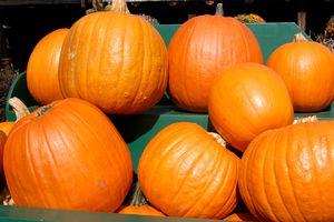 Pumpkins Displayed at a Roadside Stand