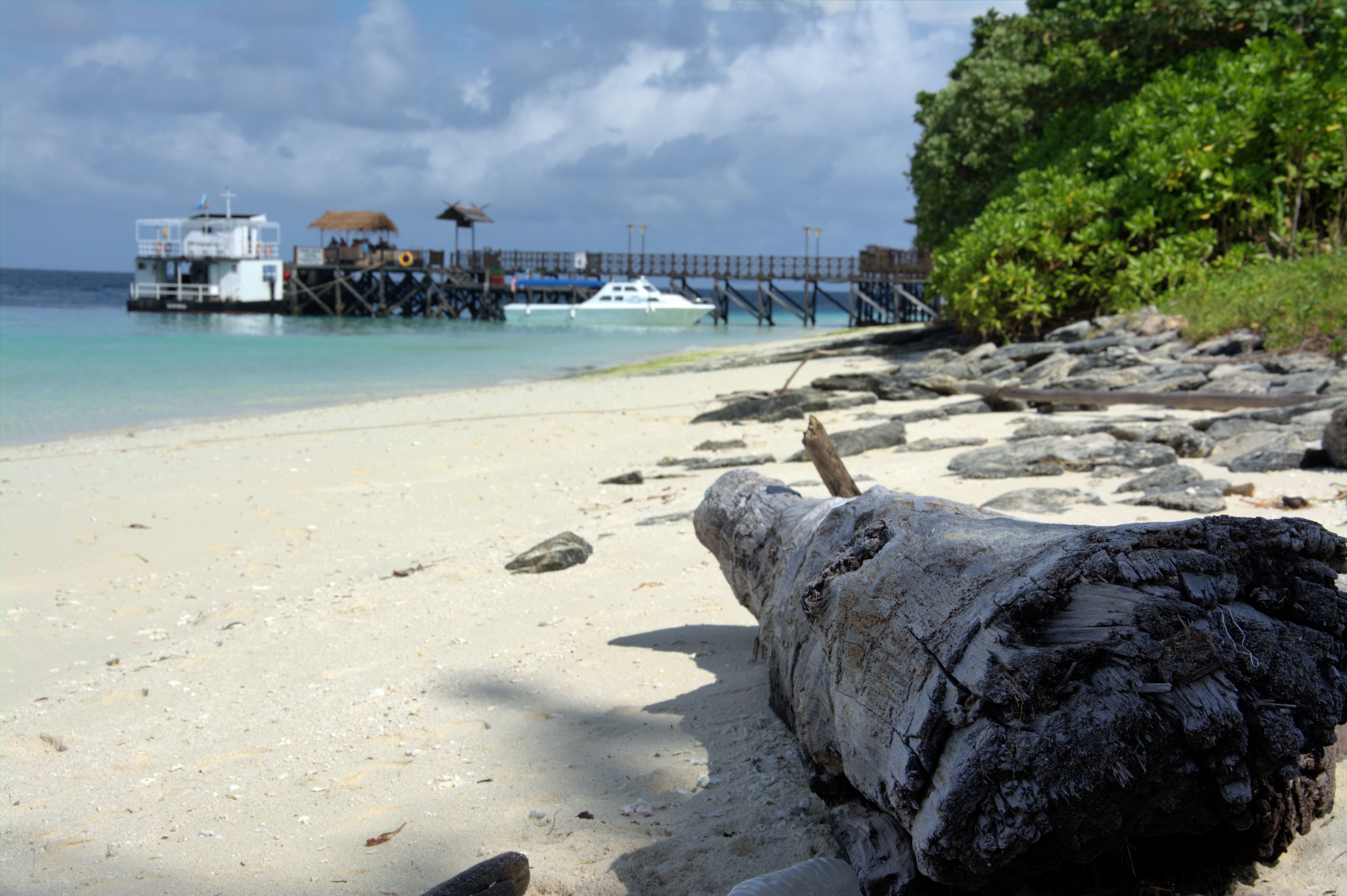 Fallen tree on island of Mataking, Sabah, Malaysia; with jetty and boats in the background.