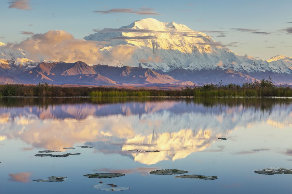 Mt McKinley reflects in a small tundra pond with lily pads, sunset iDenali National Park, Alaska.