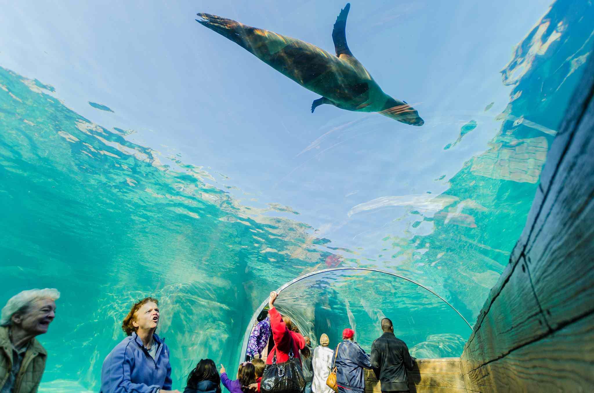 Sea Lion Sound