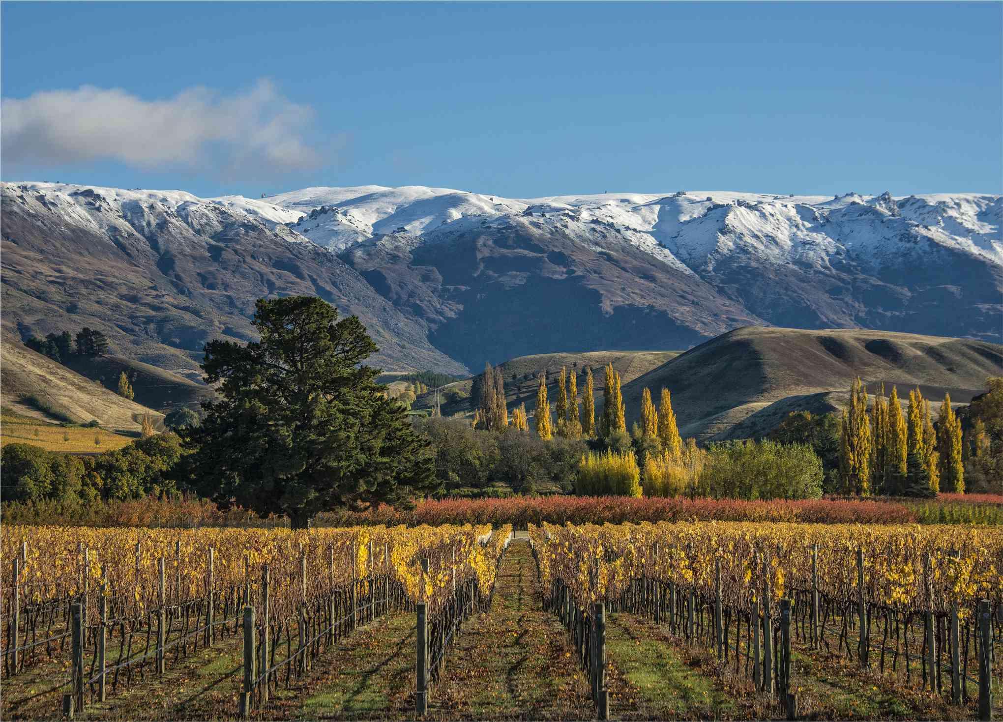 Colores otoñales en un viñedo cerca de Cromwell, Isla Sur de Nueva Zelanda