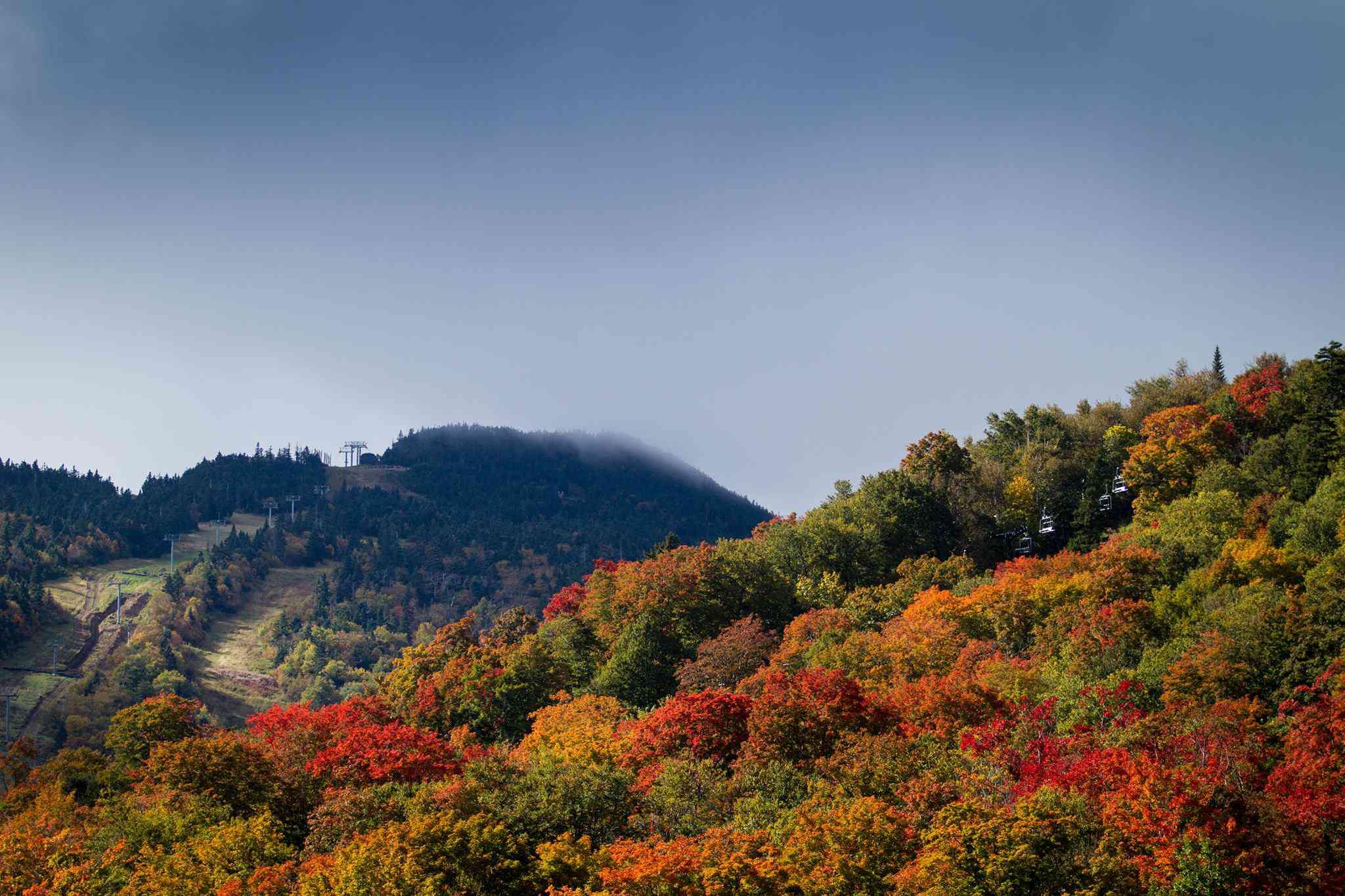 Autumn trees on a ski slope