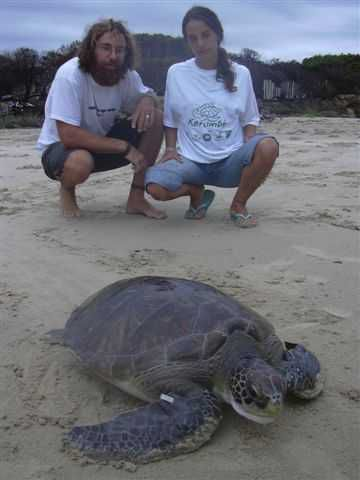 Sea Turtles of Uruguay