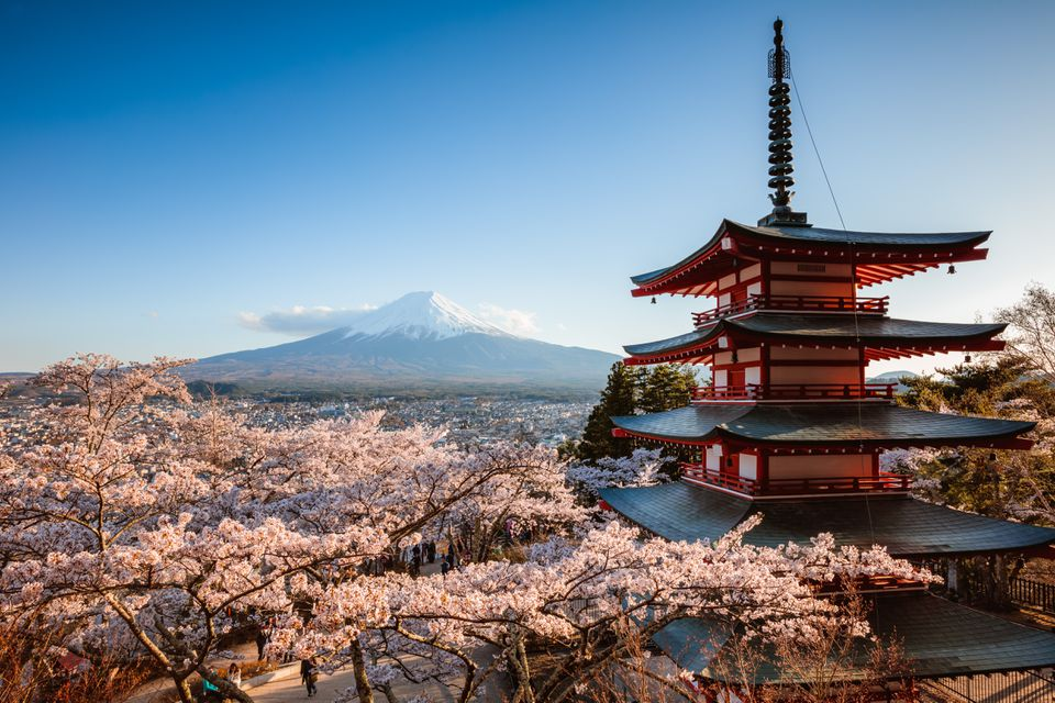 Mount Fuji and blooming trees for spring in Japan
