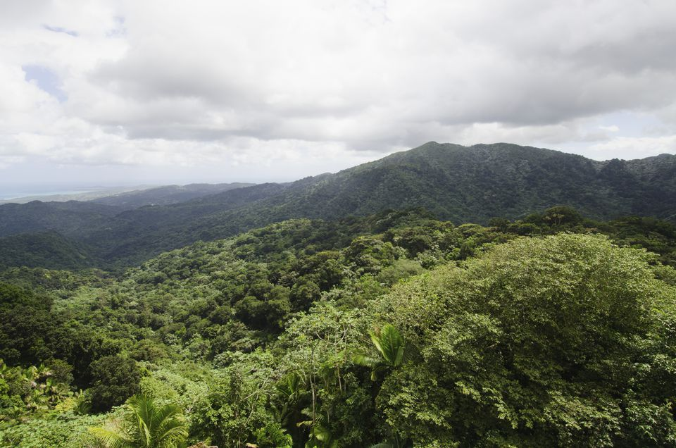 Puerto Rico, El Yunque National Forest, Green landscape