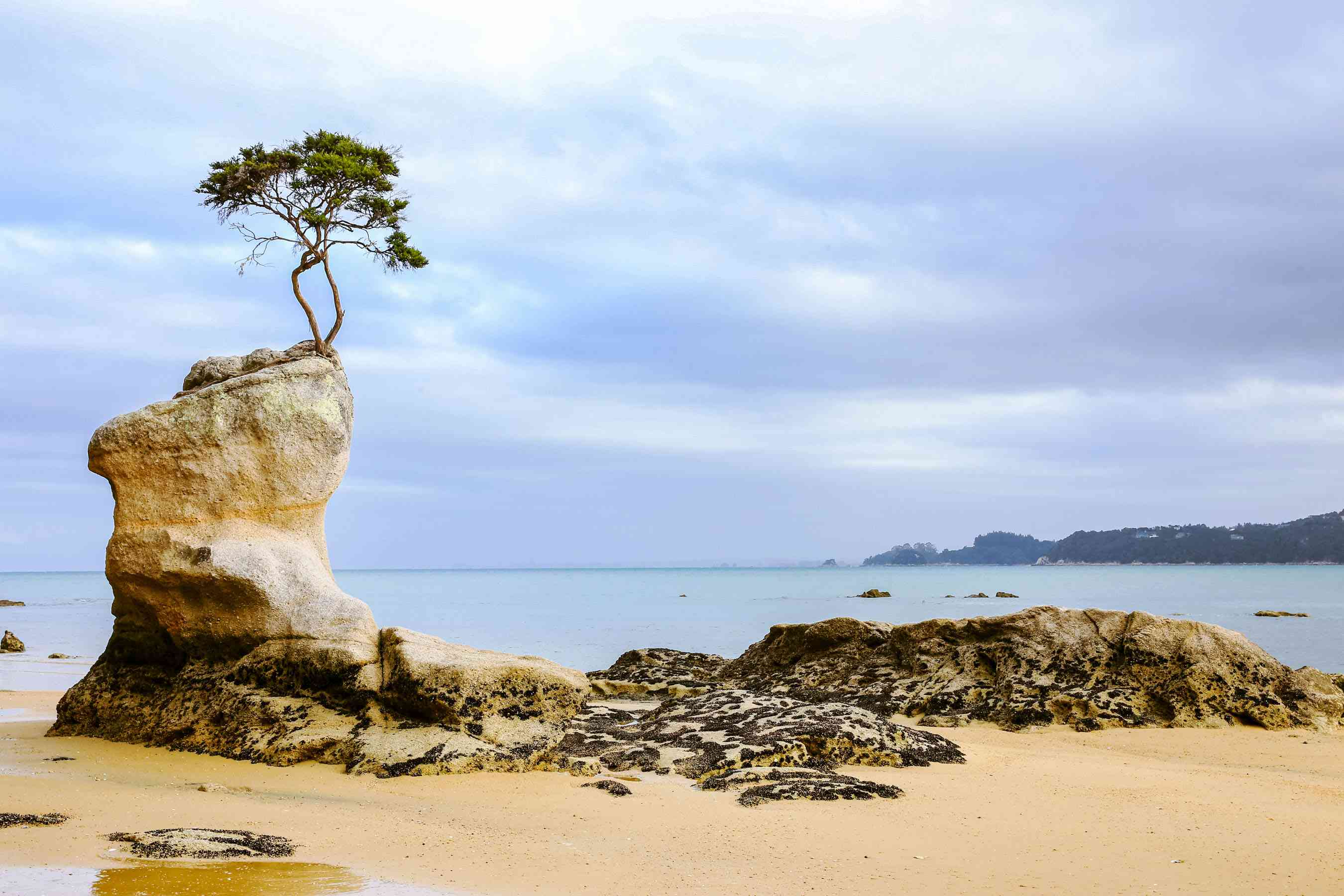 A small tree growing on top of a boulder in Abel Tasman