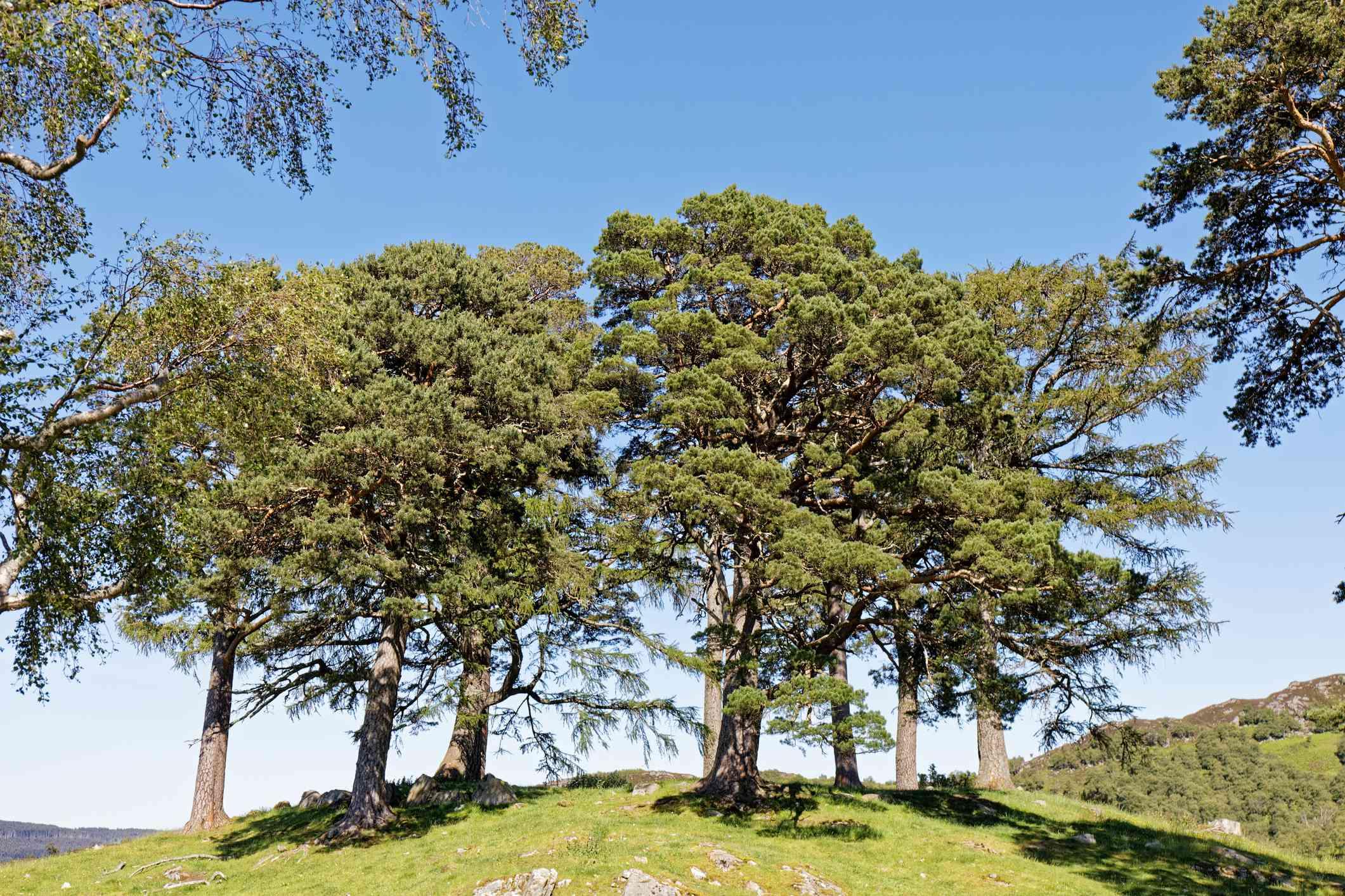 The hilltop for Craigh na Dun near Kinloch Rannoch, Scotland