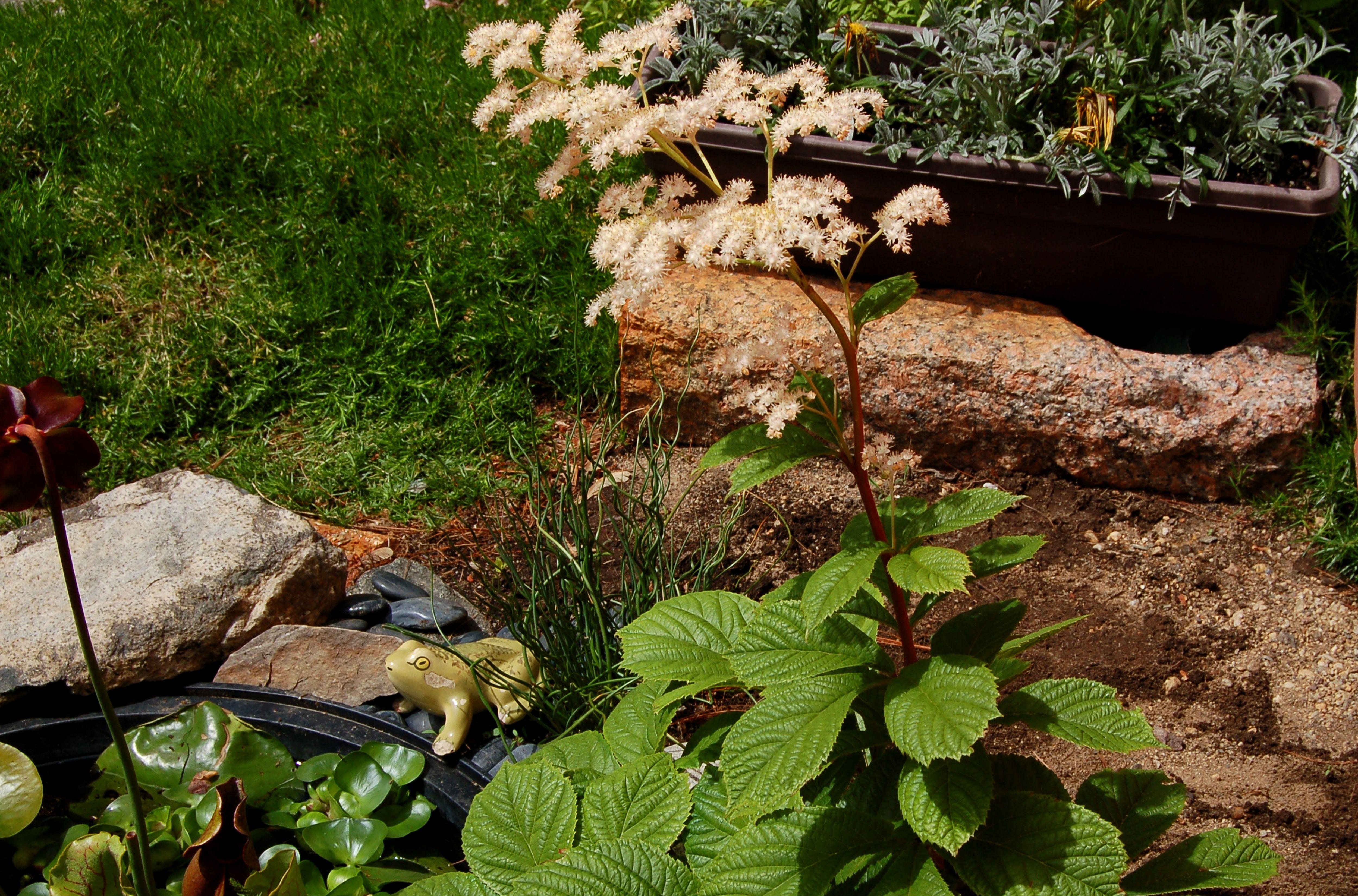 The Best Garden Tours in Washington D.C.