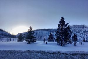 Snow and Trees in West Yellowstone