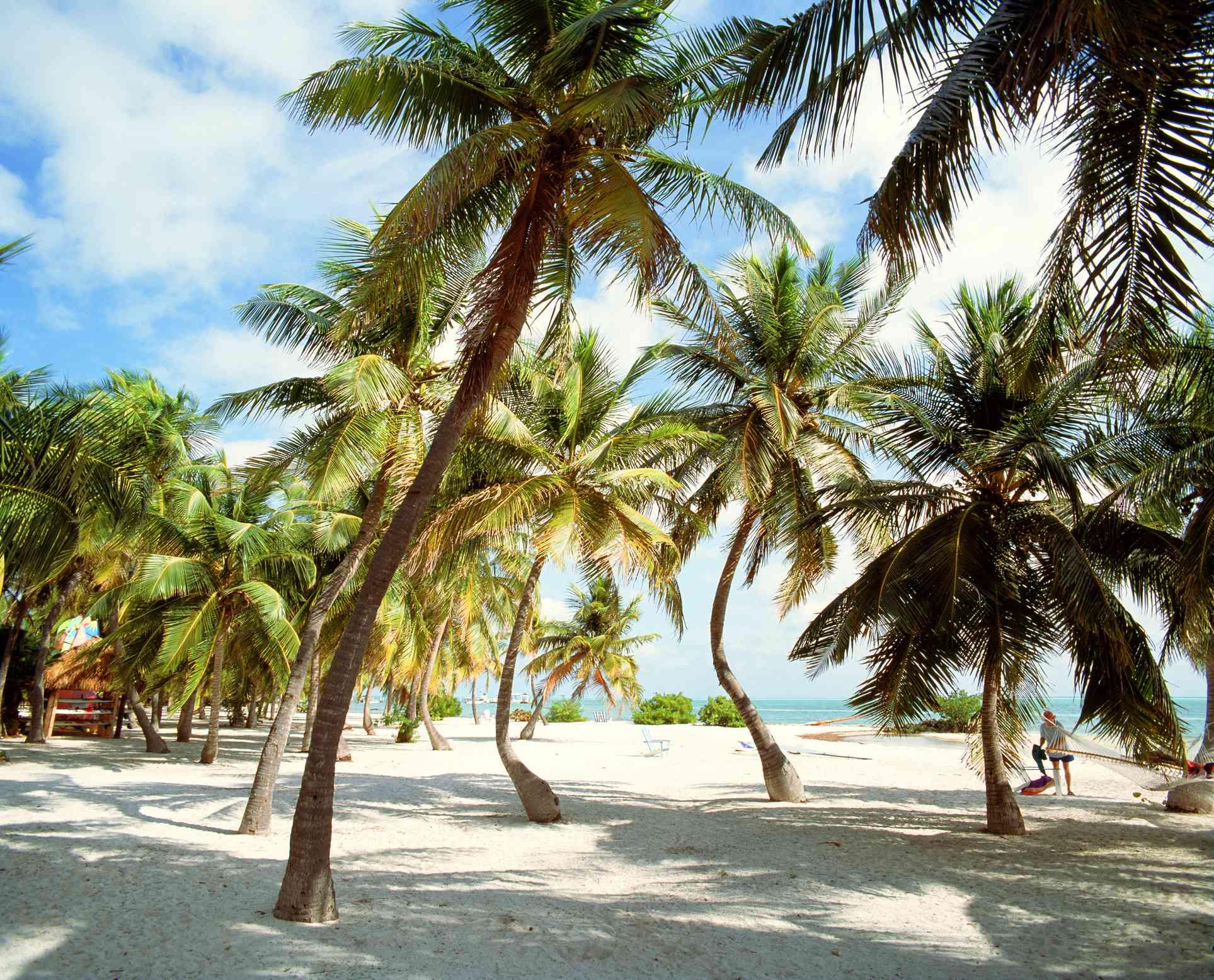 bent palm trees on a white sand beach