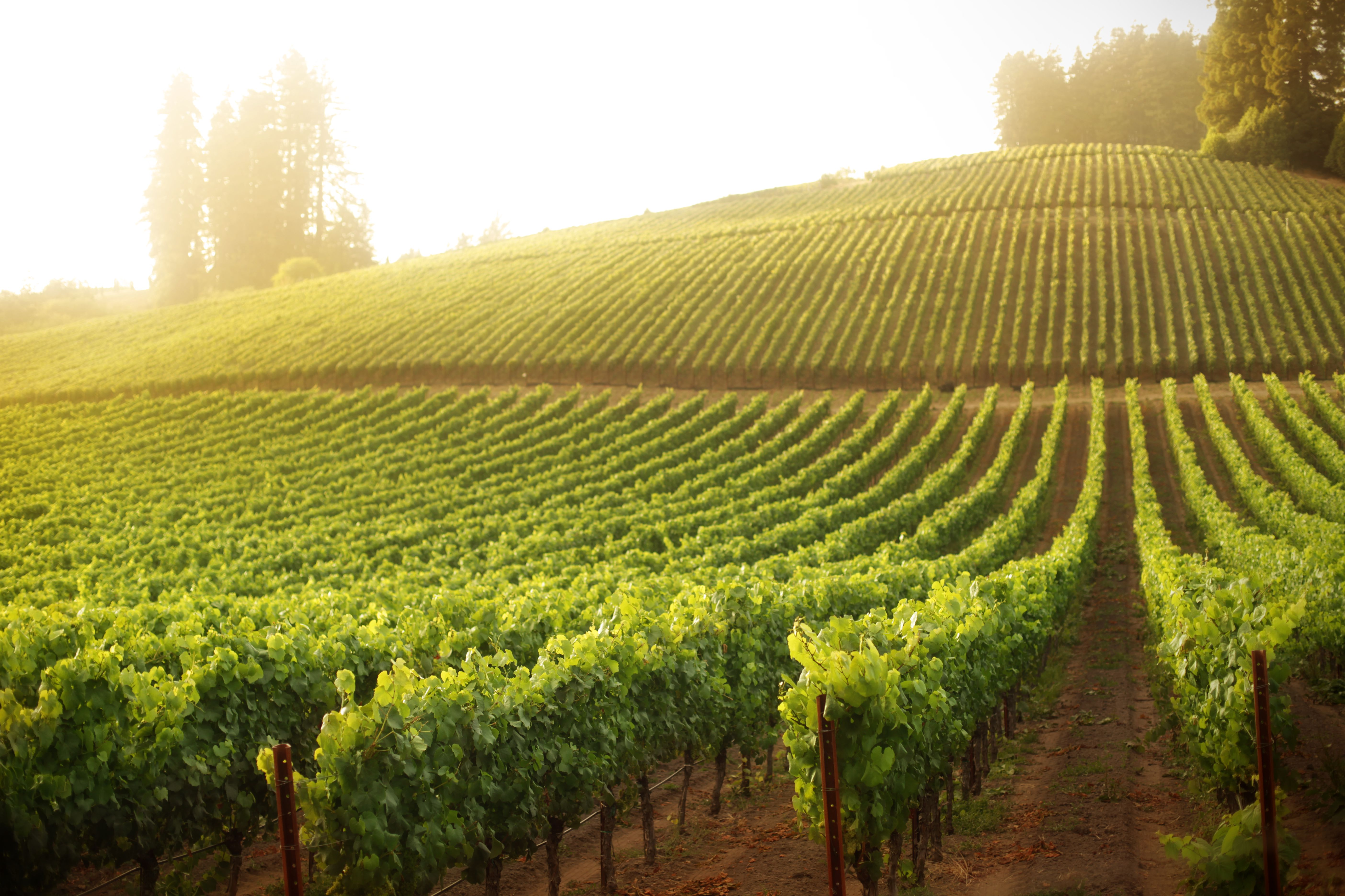 Wine Country Map: Sonoma and Napa Valley on