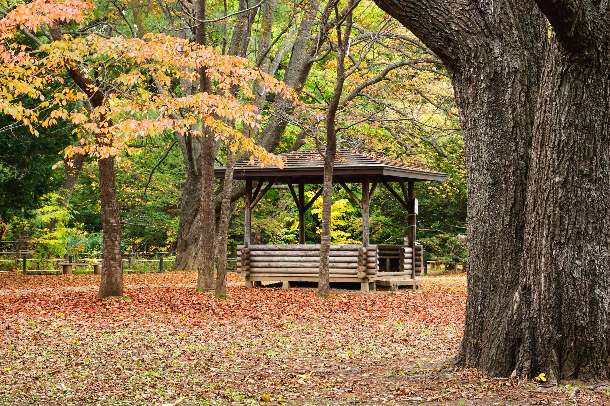 Small wooden japanese pagoda in a large park with leaves on the ground