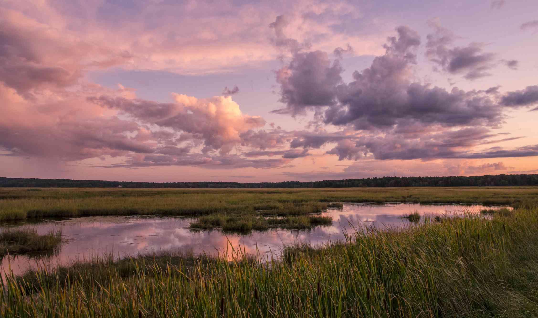 Scarborough Marsh - Maine Nature Walk