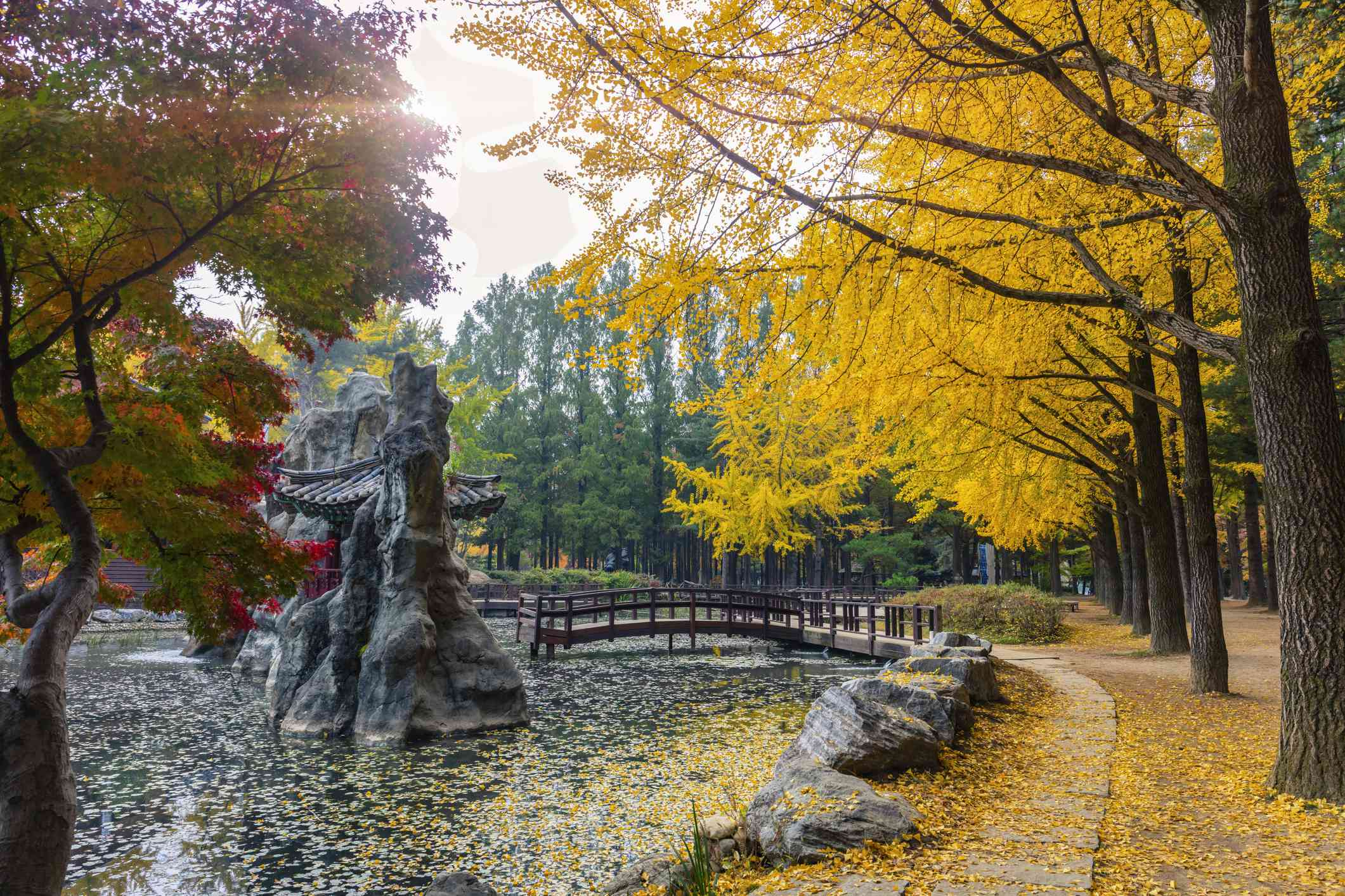 Nami Island in Autumn South Korea