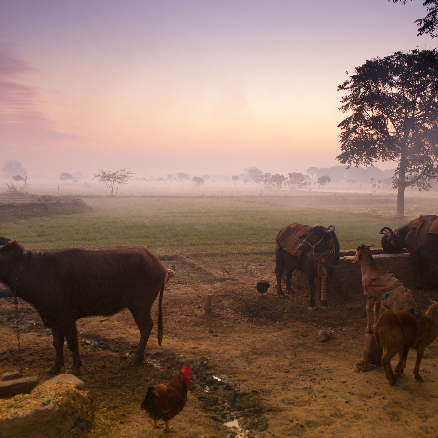 Agritourism: 17 Farmstays in India to Get Back to Nature
