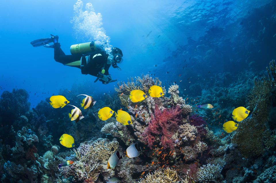 Scuba diver with butterflyfish
