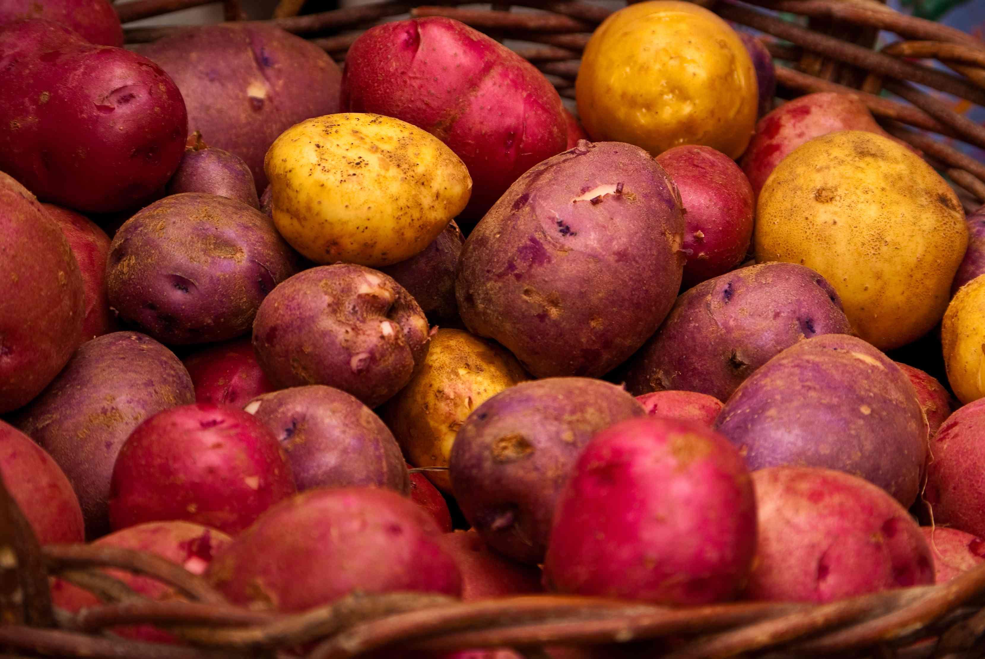 Maine Potatoes at Portland Farmers Market