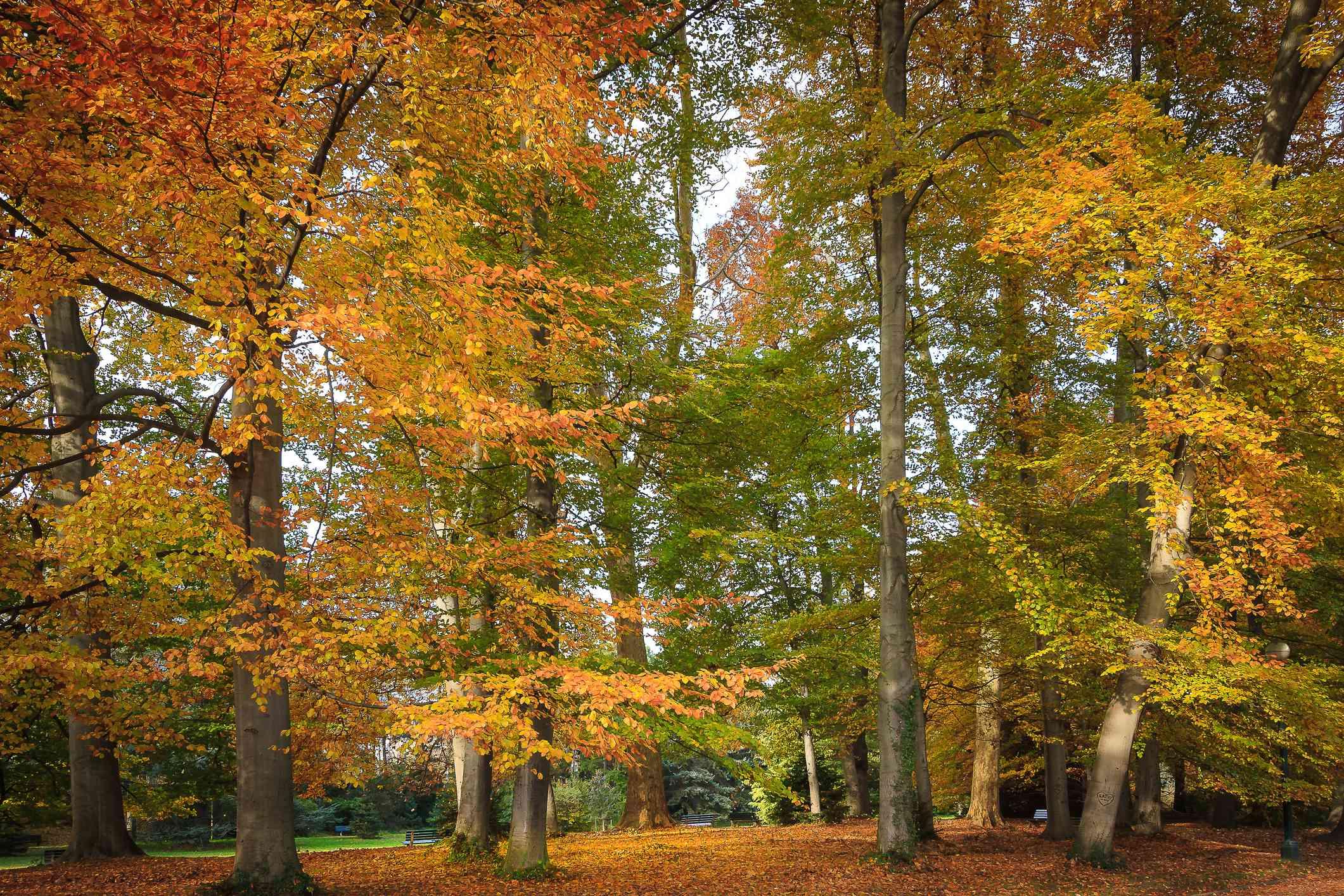 Fall foliage at the Parc de la Tête d'Or, Lyon, France