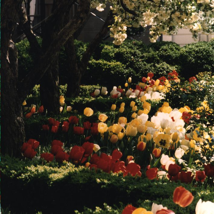 All About the White House Gardens (See Photos)