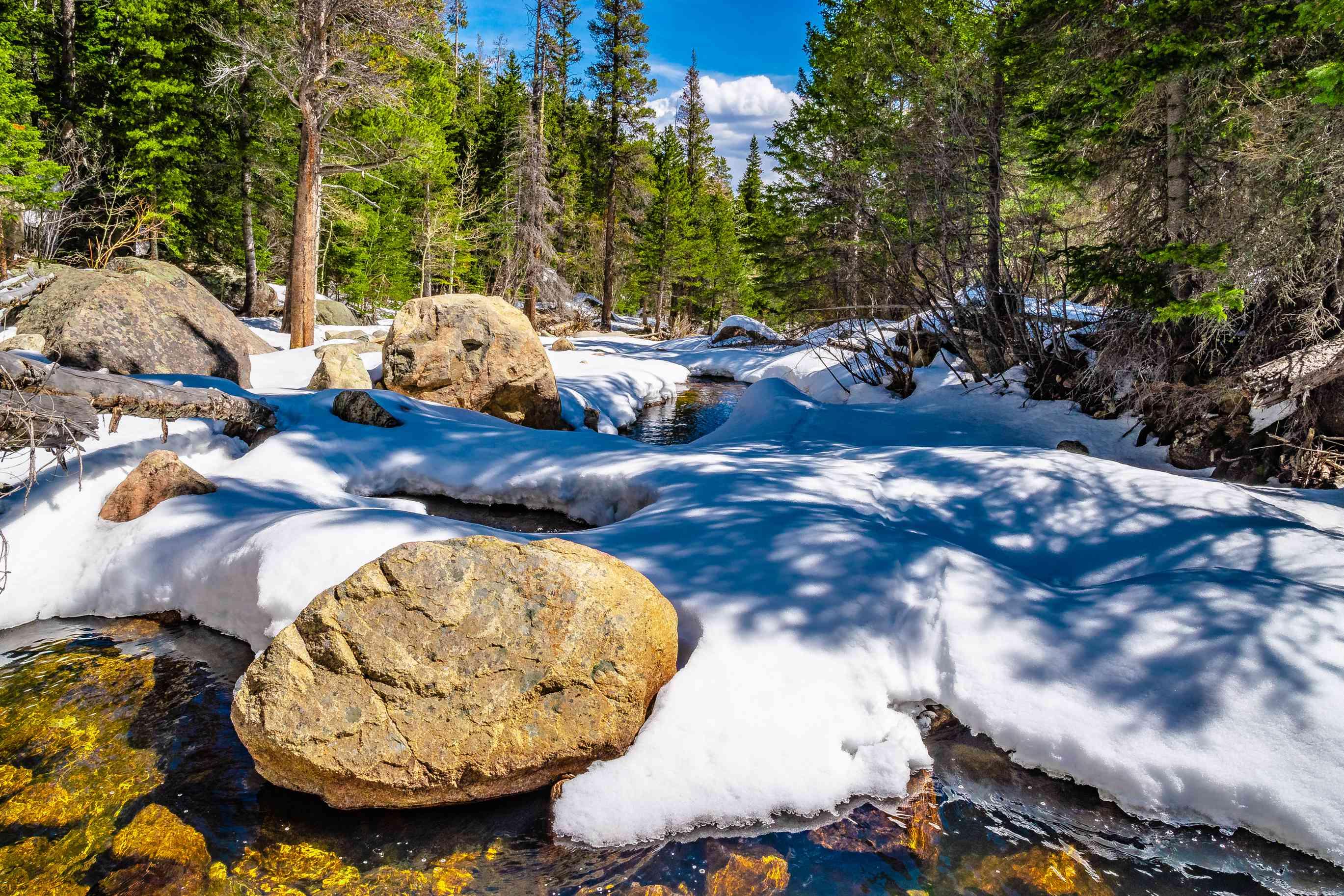 rock and snowy stream with evergreen trees on either side