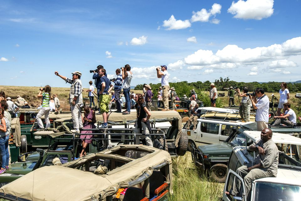 Congestion of tourist vehicles watching wildebeest cross the Mara River