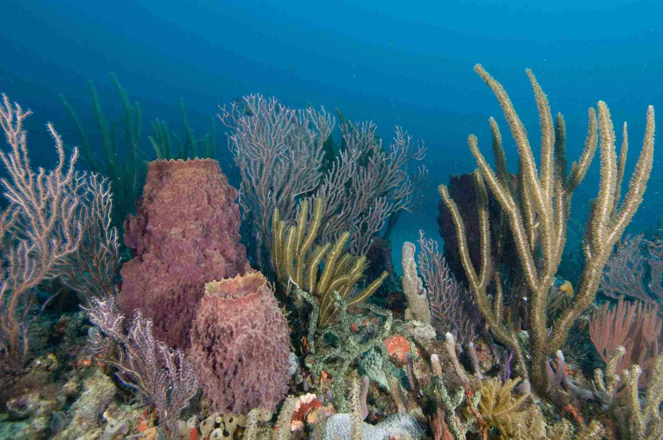 Coral reef, West Palm Beach, Florida