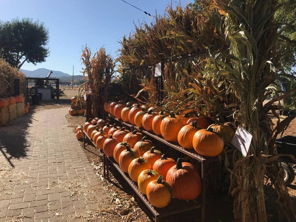 Mortimer Farms pumpkins