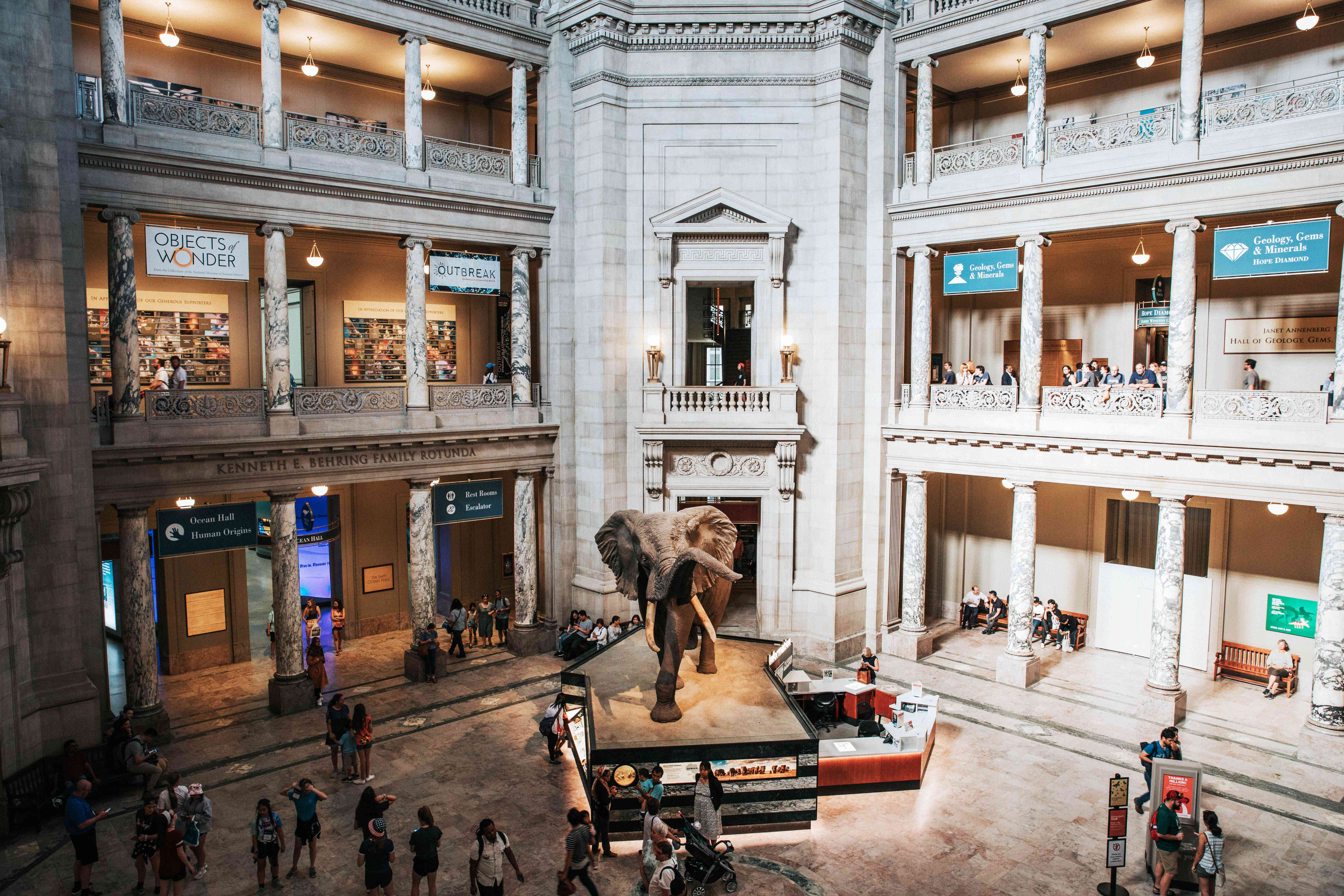Main hall in the Natural History Museum