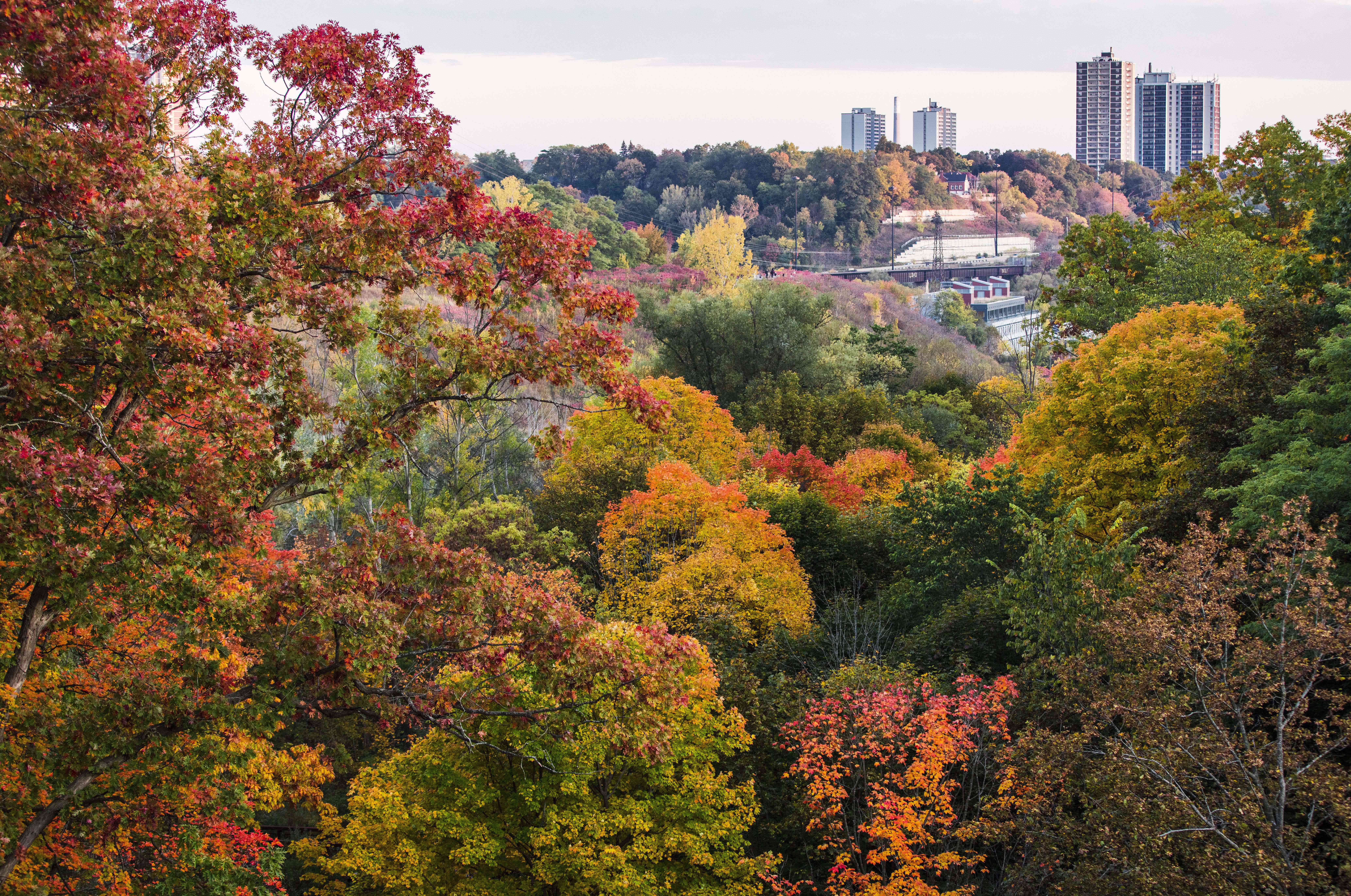 Don Valley fall foliage in Toronto