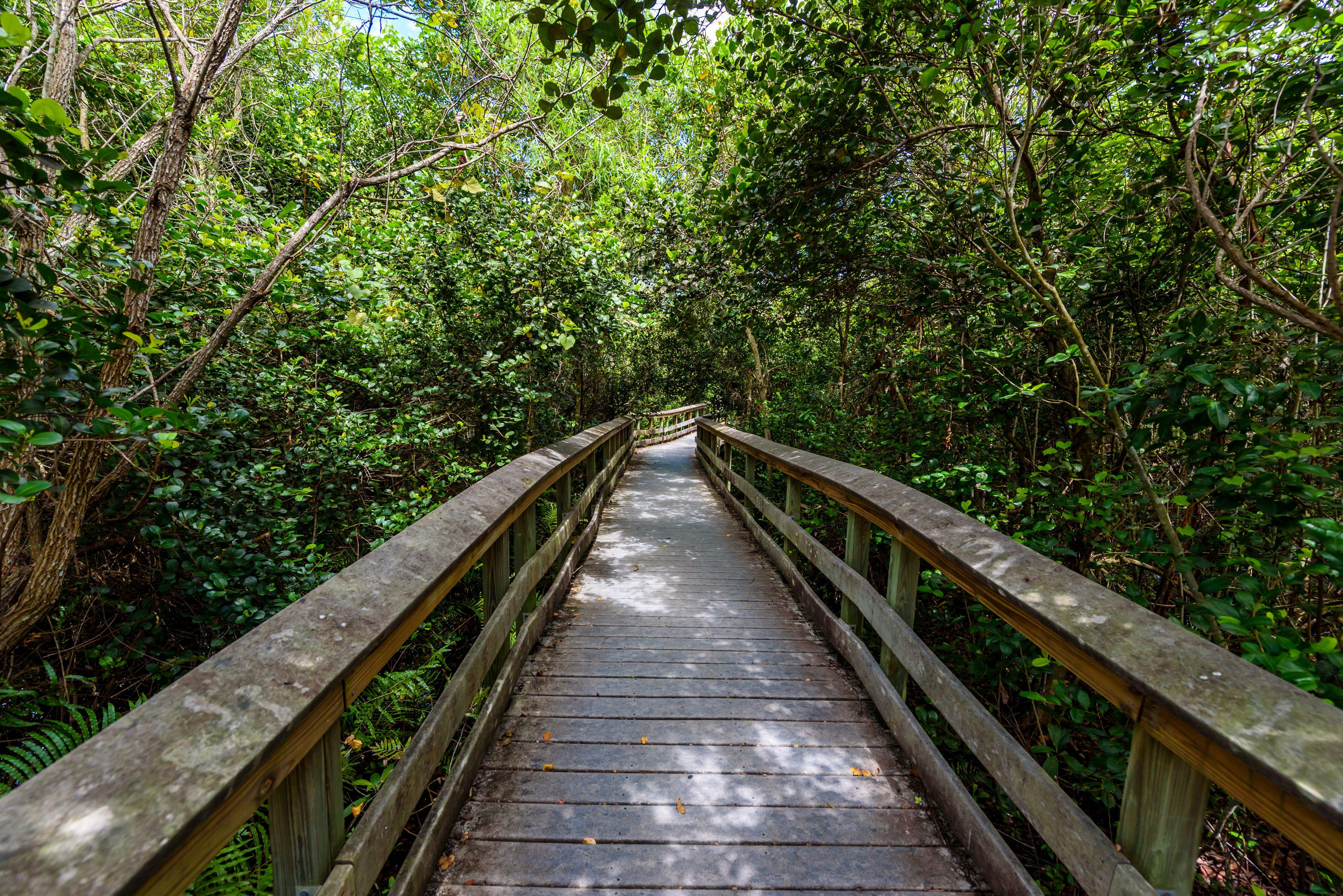 Gumbo Limbo Trail del Everglades National Parque. Paseos marítimos en el pantano. Florida, EE. UU.
