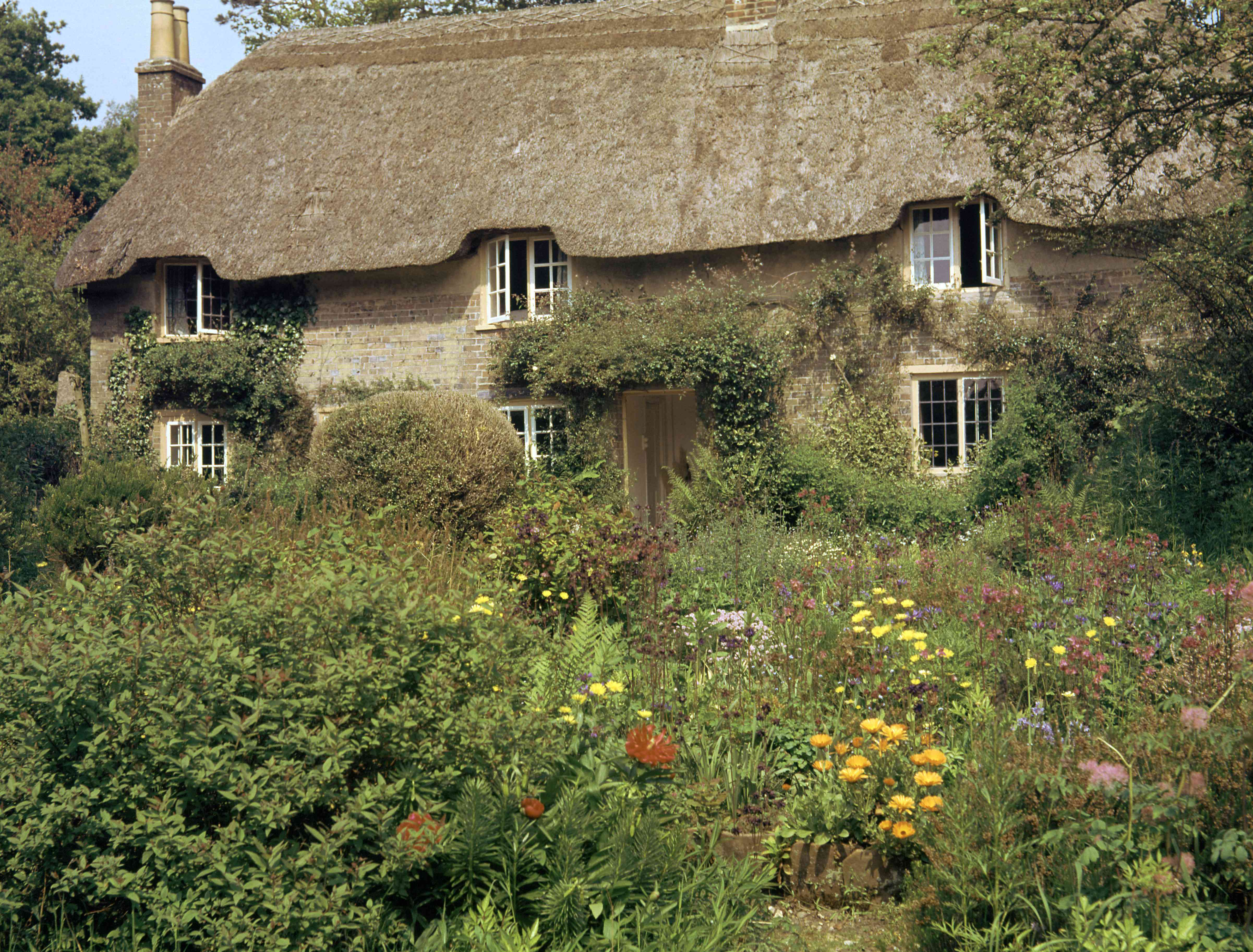 cob and thatch roof cottage surrounded by tall grasses and wildflowers